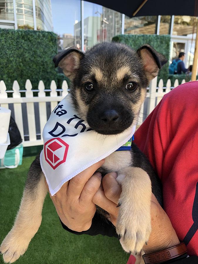 Data Therapy Dog at VMworld 2019